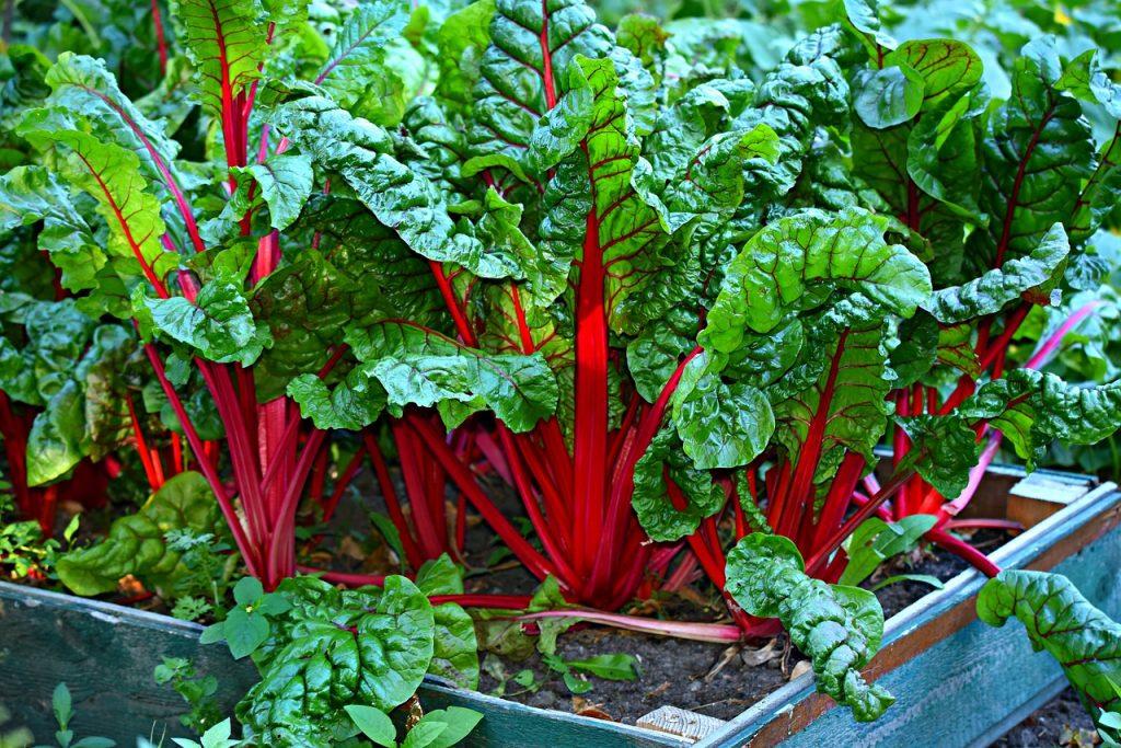 אדנית עם ירק אורגני